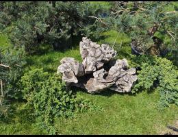 Findling 1019 - Schwemmholz