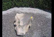 Findling 428 - Solitärfindlinge für Gärten,Gestaltungsstein