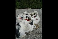 Findling 732 - Solitärfindlinge für Gärten,Raritäten,Showstone