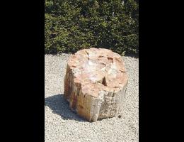 Versteinertes Holz,Raritäten - Findling 682