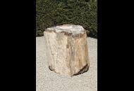 Findling 681 - Versteinertes Holz,Raritäten
