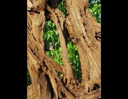 Findling 1040 - Holzskulpturen